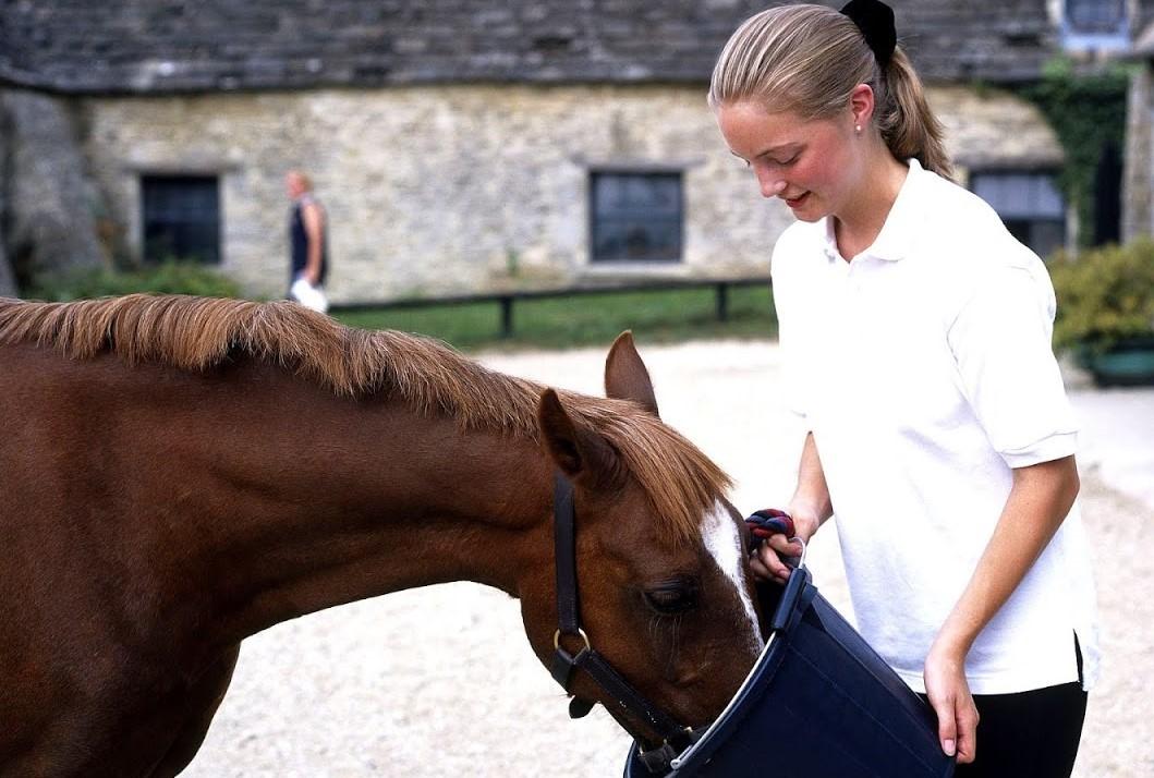 право картинки кормления лошадей арана это